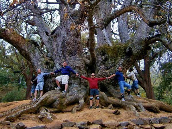 Team4you Photo Gallery OLD CHESTNUT TREE 02 Adventure Outdoor Activities Marbella Málaga Andalucia