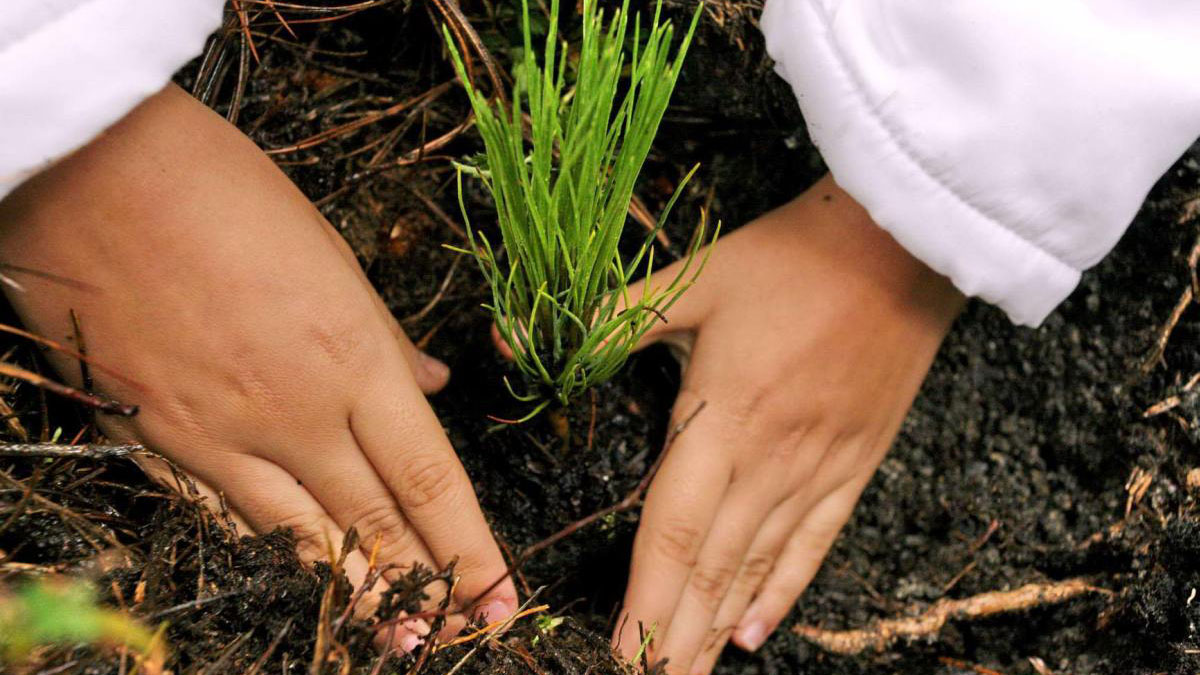 CORPORATE REFORESTATION PROJECT Málaga Costa del Sol an intriguing activity 01 | Team4you