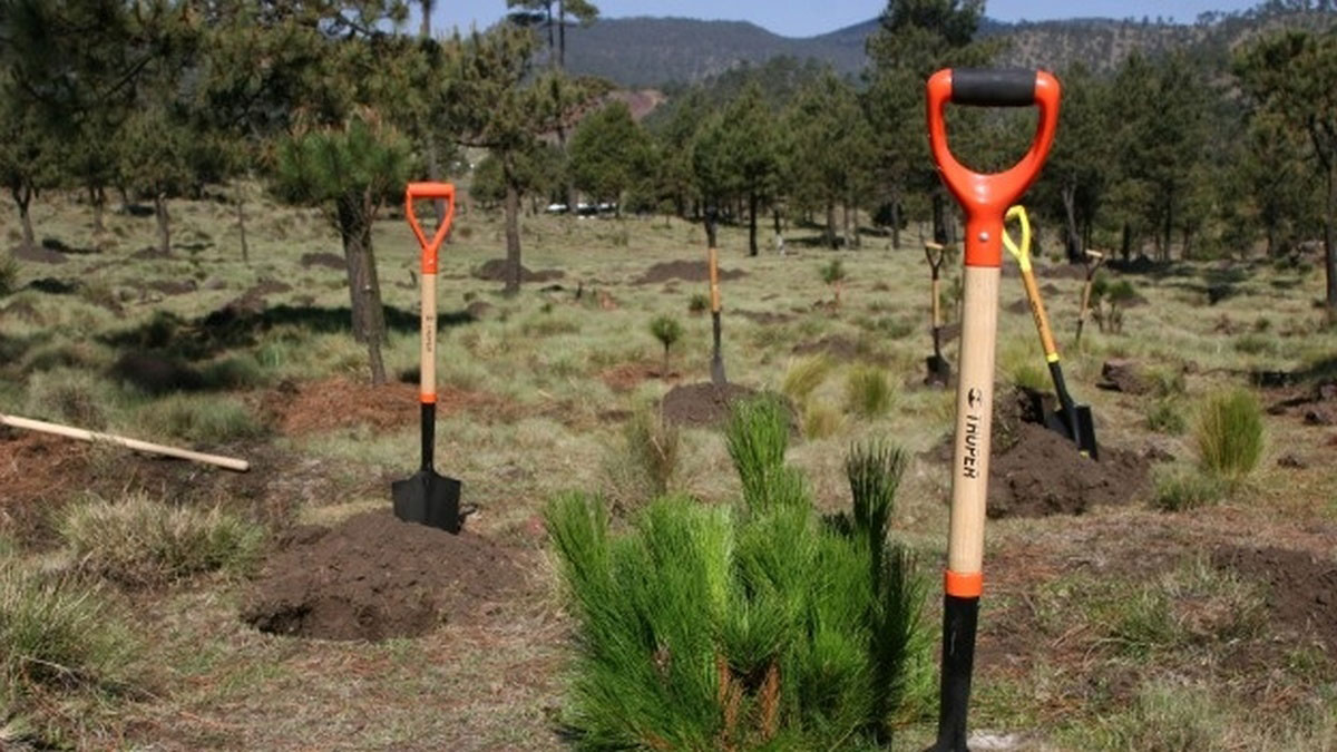 CORPORATE REFORESTATION PROJECT Málaga Costa del Sol an intriguing activity 02 | Team4you