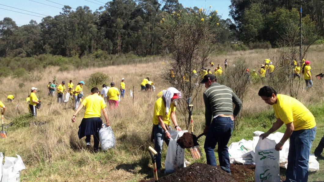 CORPORATE REFORESTATION PROJECT Málaga Costa del Sol an intriguing activity 03 | Team4you
