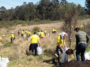 Reforestacion Corporativo Marbella Team building y Eventos corporativos