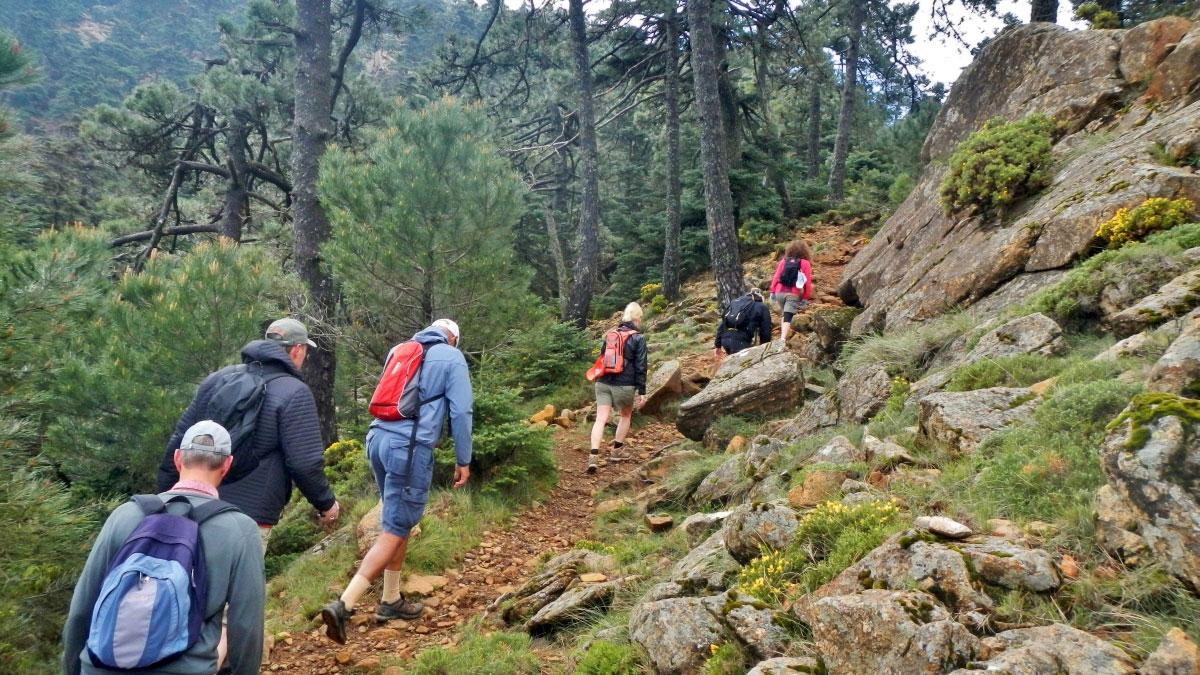 Trekking trip Málaga Costa del Sol Los Reales 01 | Team4you